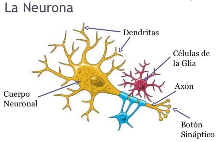 celula-glial