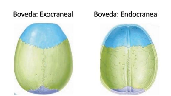 endocraneal