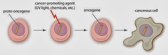 oncogén